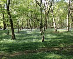 astonbury woodland